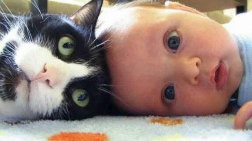 baby-and-cat